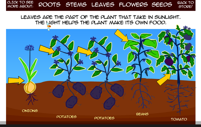 the magic school bus plants seeds pdf