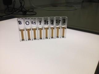 7. שם השיטה: בדיקת ריכוז החלבון שהתקבל באמצעות ספקטרופוטומטר בריאגנט ברדפורד