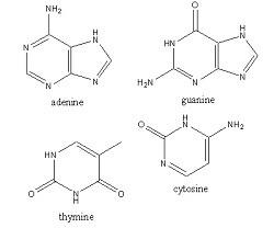 Letter N : Nitrogenous Base