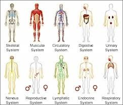The systems in the body