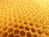 A Discussion on  Bees from Ted Talks