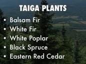 Taiga Plants