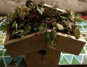 Birdhouse with Green Roof