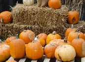 Fall Fest - - Friday, October 28th