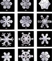 צורות השלג