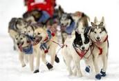 Alaska's Iditarod- The Last Great Race