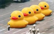 rubber duck day in hong kong