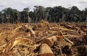 Question 16: At one time rainforest covered 14% of the Earth's land surface. Today rainforest only covers 6%. Why should a person care about the lost rainforest ground? Why are the rain forests being cut down? What would happen if they all disappeared?