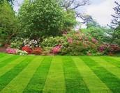 Bill Gates' Lawn