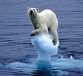 A Floating Polar Bear