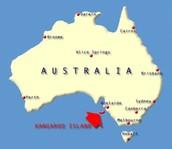 Where Western Grey Kangaroos live