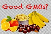 Positive Implications of GMOs