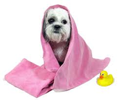 We are Pampered Paws, Give us a call!