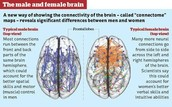 Activity in the male and female brain
