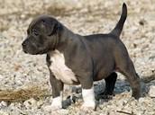 im just a puppy