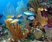 Little Cayman Reef