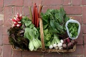 A basket of fresh vegetables