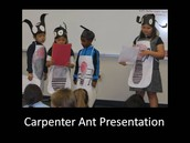 Carpenter Ant Presentation