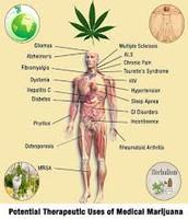 medication of medical cannabis