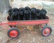 Estoy Vendiendo los Cachorros!!!!!!!