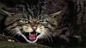 This is a feral cat
