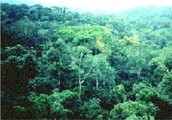 Location, transportation, shots, and clothing for Tropical Rainforests