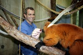 Zoo Director Feeding the Animals a Snack
