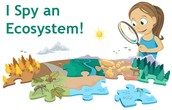 Final Science Unit: Ecosystems
