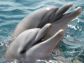 2 facts about the dolphins: