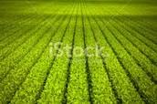 Fertile crops