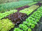 Become Involved With Soil Protection Program
