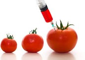 Disadvantages of Genetically Modified Organisms