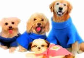 We have snuggies for dogs!