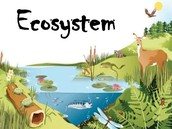 Ecosystem Reference