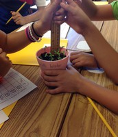 Measuring our plant growth