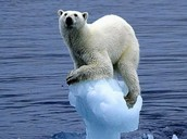 Are polar bears in this problem?