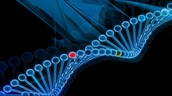 How the obesity gene works