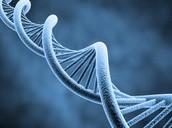 WHAT IS GENETICS