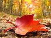 מידע על הסתיו