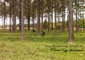 Piney Woods farm