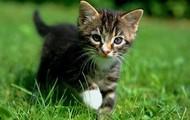 Produits pour chats