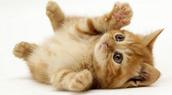 Cats-Free Verse