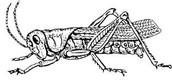 A Lovely Grasshopper