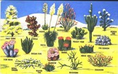 What types of of plants are in a desert?