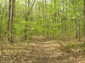 Deer lane