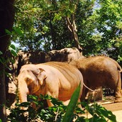 These are some of the elephants we saw at the zoo.