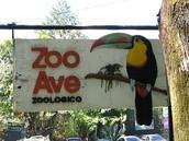 el zoologico:zoo ave