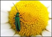 Insect POV.