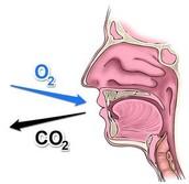 Oxygen Carbon Dioxide