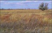 Dead Gold Grassland